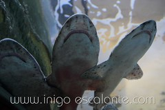 Blog: Planes en familia con niños: Visita al acuario de Donostia San Sebastián, el Aquarium (Iñigo Escalante) Tags: sea pez water aquarium mar agua peces donosti sansebastian euskadi acuario paisvasco cantabrico