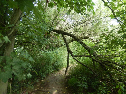 Branches over a riverside path near Aldford, 2016 Jul 06