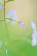 Unschrfe (Mike_Sciencediary) Tags: detail licht natur blumen farbe blten unschrfe schrfe