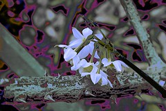 Winter Flowers. (maginoz1) Tags: abstract art flowerpower winter july 2016 surreal curves luminosity alisterclarkmemorialrosegarden bulla melbourne victoria australia canon g3x
