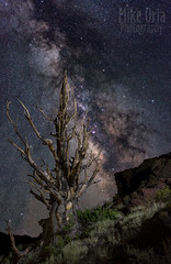 Return to Tomorrow (mikeSF_) Tags: bristlecone pine whitemountains california inyo forest methuseleh old ancient bristle deathvalley bishop bigpine outdoor night astro astrophotography photography mikeoria pentax k3ii da21 21mm limited stars space galaxy milkyway sky longexposure