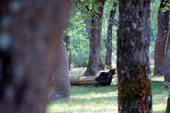 tronco (Eneko Castresana Vara) Tags: trees rboles rbol log tronco forest bosque woods armentia vitoria hdr