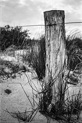 Fence (Ronny-1976) Tags: urlaub zaun hiddensee 1100min silvermax129 topconre300 adoxsilvermax100100
