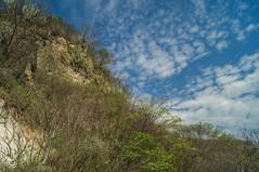 DSC03175 (Braulio Gmez) Tags: barrancadehuentitn biodiversidad caminoamascuala canyon canyonhuentitan faunayflora floresyplantas guadalajara jalisco mountainrange naturaleza sierra senderismo paisaje barrancadehuentitn barranca huentitn ixtlahuacandelro mxico guardianesdelabarranca