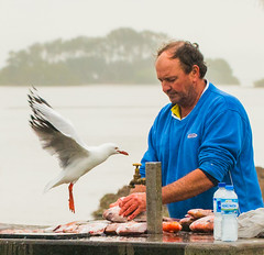 Daring_DSC5606 (Mel Gray) Tags: swansea lakemacquarie seagull fisherman snapper water lake