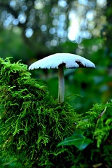 Lonely in the woods (Mark & Cy Photos) Tags: angle arts background blue blurred body bokeh camera color colour composition crafts detail dslr effect environmental exterior field flickryes focus format framing front fungi gear general genre geocodedyes gray leaf light lighting mushroom mushrooms natural orientation outdoor parts photo photography plant portrait rural setting shade sky still style travel vegetation vertical view whiteartscraftsphotographyworkflowgeocodedyesflickryessettingexterioroutdoorphotogenrestyletypetravelruralgeneralgearstillcameradslrorientationportraitlightingnaturallightframingcompositionenvironmentaldetailformatvertical