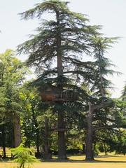 La maison dans les arbres - Parc du chteau d'Usson, Pons (17) (Yvette Gauthier) Tags: parc maison arbre cdre 17 charentemaritime poitoucharentes pons chteaudusson chteau chteaudesnigmes
