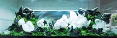 Day 1 - Planting (viktorlantos) Tags: aquascaping aquascape aquariumplants aquarium aquascapingshopbudapest plantedaquarium plantedtank plantedaquariumgallery underwaterlandscape underwaterworld fish fishtank crystal whitecrystal artwork aquaticplants internationalaquaticplantslayoutcontest howtoseries