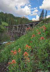 Trout Lake (Erik Johnson Photography) Tags: purple telluride colorado mountains rocky indian paintbrush wildflowers wild flowers green railroad bridge trout lake trestle abandoned pass