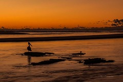 The Entrance, NSW Australia (AllportPhotography) Tags: ocean sunrise goldenhour colourful orange silhouette tree pelican waves rocks water sky clouds wintermorning australia landscape sunscape