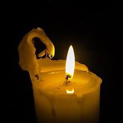 "Swan song (Jerzy Durczak (a.k.a."" jurek d."")) Tags: candle alien swan"