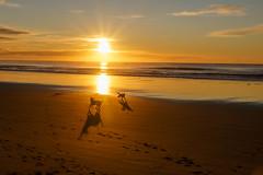 Perfect sunrise for dog fun games (Sandy Brinsdon (theafterworkphotographer)) Tags: waikuku beach sunrise flickr christhchurch canterburynz
