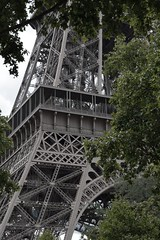 pullulating flora branches and pullulating steel branches ... (fdfotografie) Tags: tower eiffel tour paris champdemars tree leaves flora branch architecture steel pullulate green grey outdoor daylight dslr color uprightformat friendly ambivalent section detail