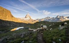 _DSC0649 (jyl4032) Tags: gornergrat zermatt switzerland