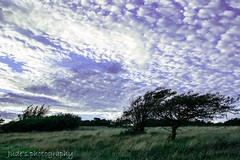 Nothing but blue skies (judethedude73) Tags: sussex downs tree sunset dusk evening landscape nature cloud