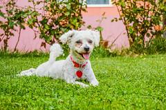 CHICA (juan carlos luna monfort) Tags: perro dog gos