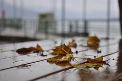 Oberosterreich Attersee DSC0897 (reinhard_srb) Tags: obersterreich salzkammergut attersee herbst regen kalt menschenleer ufer promenade tisch laub bltter nass gelnder steg trbe melancholisch