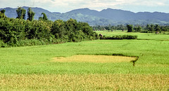 Landscape : Nam Tha #2 (foto_morgana) Tags: analogphotography analogefotografie asia indochina landscape laos nikoncoolscan outdoor panoramic photographieanalogue ricefield scenic travelexperience vuescan