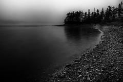 dusk fog (rick miller foto) Tags: fog dusk newfoundland bw mono monochrome shore trees