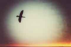 Traum (***toile filante***) Tags: sky himmel bird vogel poetic poetisch poetry poesie creative kreativ soulful emotions imagination magic magie zauber