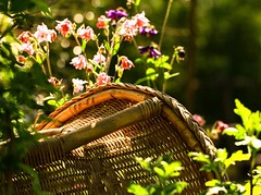 ...we found the chair, but where's granny:).... (dawn.tranter) Tags: nature sunshine springtime flowers garden chair granny dawntranter
