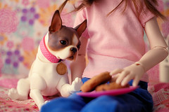Olive & Winnie (Lucy-Loves?) Tags: doll bjd dollstown olive ganga iplehouse dog petdoll anthro bostonterrier