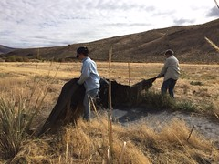 IMG_1423 (Oregon Natural Desert Association) Tags: denny jones ranch weed mat removal 2016 stewardship trips