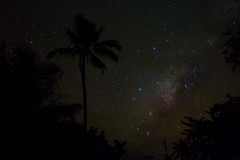 Milky Way Palm (free3yourmind) Tags: milky way palm stars night dark nightsky bohol philippines