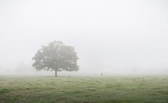 Whiteout (Sarah_Brooks) Tags: fog foggy mist autumn tree trees lonetree parkland barrington