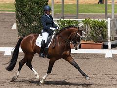 161023_Aust_D_Champs_Sun_Med_4.3_6885.jpg (FranzVenhaus) Tags: athletes dressage australia siec equestrian riders horses performance event competition nsw sydney aus