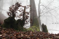 foggy forest  (cyberjani) Tags: forest slovenia rakitna