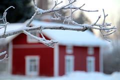 10th DEC | Red House (Toni Kaarttinen) Tags: christmas xmas winter house holiday snow suomi finland season finnland december advent branch cottage yule adventcalendar finlandia holidayseason  finlande finlndia sammatti finnorszg finlanda finlndia  finnlando