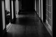 (Sadaigaue) Tags: luz contraste pasillo corredor