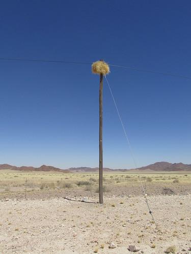 Nid sur la route, Namibie
