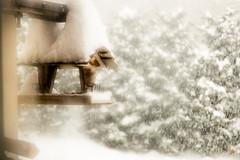 Here comes the snow (Rom1bird) Tags: wood trees white house snow bird fog garden blurry jardin steam hut arbres neige shelter snowfall maison chamonix blanc chute oiseau brouillard flou bois cabane refuge bue abri argentire atmosphre