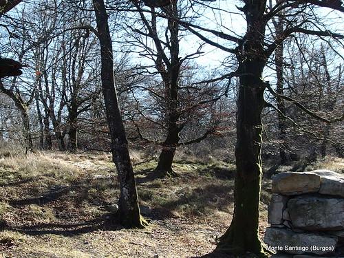 monte-santiago-senderismo-sermar-valladolid-ruta365 (34)