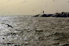 Storm and seagull (altanyasar) Tags: seagull istanbul deniz sahil lodos martı dalga bostancı