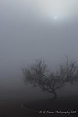 just peeking through (Michael Kenan) Tags: morning arizona tree phoenix fog foggy az atmospheric