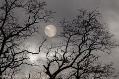 Not the moon (rdroniuk) Tags: trees winter sun february oakville wintersun oakvilleon