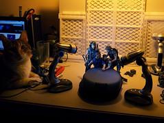 """Making of"" 1 (and Poncia, my cat) (Pato Berroeta) Tags: action alien william aliens figure hudson figuras figures bishop dwayne accion hicks neca xenomorph figura xenomorfo xenomorphs xenomorfos necaonline"