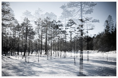 Resonance (GauthierD) Tags: trees winter snow cold norway landscape exposure double impression verticality marka surimpression