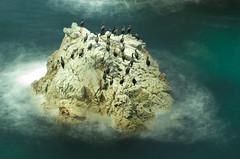Monteray USA (robferblue) Tags: ocean trip sea wild usa holiday robert beach play sally otters ferguson monteray