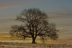 WINTER SUNSET (mark_rutley) Tags: winter sunset sky snow tree weather clouds manipulation hampshire singletree lonelytree thelonetree