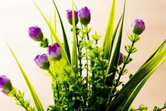 Florencias (fatimaganuz) Tags: verde flor lila campo morado