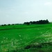 """ricefields • <a style=""""font-size:0.8em;"""" href=""""http://www.flickr.com/photos/128593753@N06/16480414658/"""" target=""""_blank"""">View on Flickr</a>"""