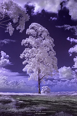 Infrared (Jefferson Allan - Photographer) Tags: infrared infravermelho fotografocampinas jeffersonallan