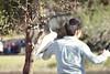 Bird Selfie (everyday sh⊙_☉ter) Tags: park beach forest sydney waterfalls kookaburra wattamolla garie royalnationalpark audley stanwell hackerriver