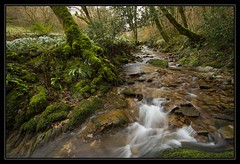 Snowdrop Valley, Exmoor (RattyBoots) Tags: canon stream 7d snowdrops valentinesday exmoor polariser february14th snowdropvalley newcanon1022