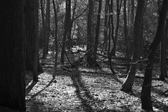 (CLBuggins Photography) Tags: park trees light blackandwhite sun sunlight nature monochrome forest woodland dark nationalpark sticks woods nikon shadows highlights twigs lickeyhills wigwam nikond5000