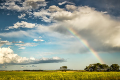 Prairie Rainbow (mnenson) Tags: landscape canola saskatchewan landscapes clouds agriculture seasons crops rainbow summer skies sky rainbows japan phototype canada tokyo outdoors places environment